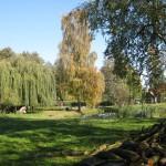 Teichlandschaft 5