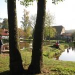 Teichlandschaft 1